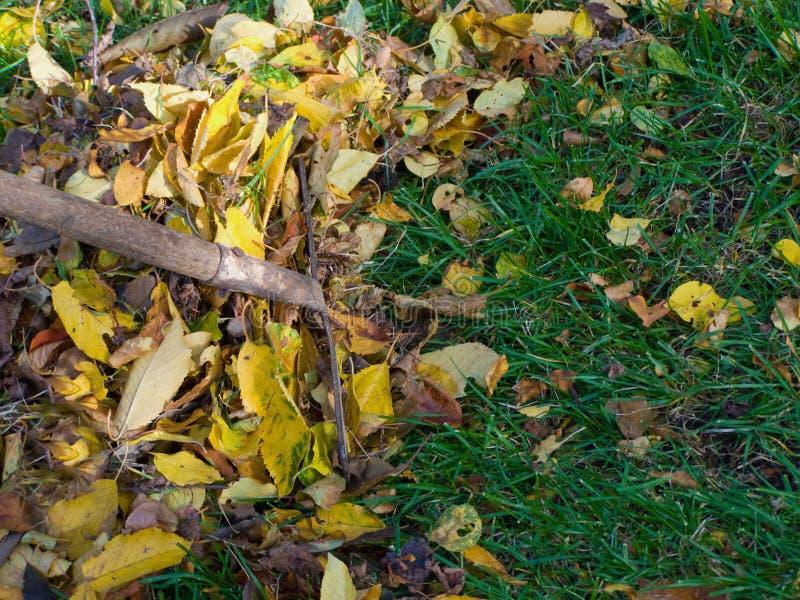 jesień liść target2054_0_ zdjęcie stock