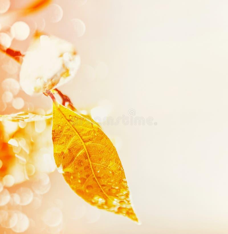 Jesień liść z raindrops i bokeh na lekkim tle, miejsce dla teksta, spadek natura fotografia stock