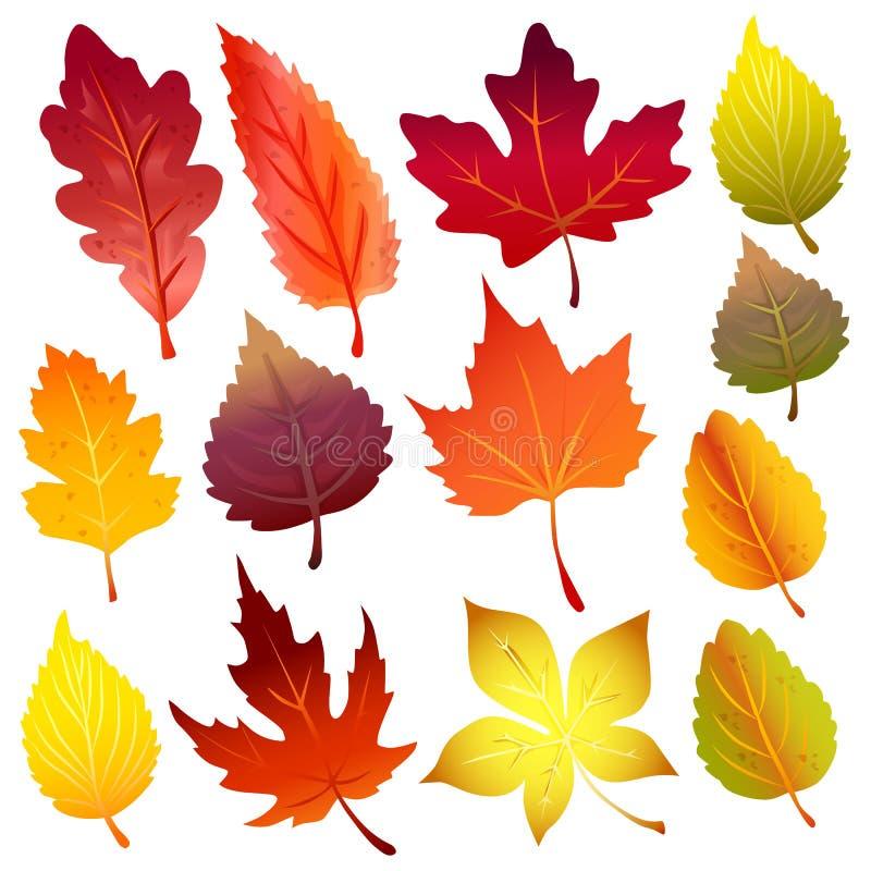 Jesień liści elementu ikony lasowy set ilustracji