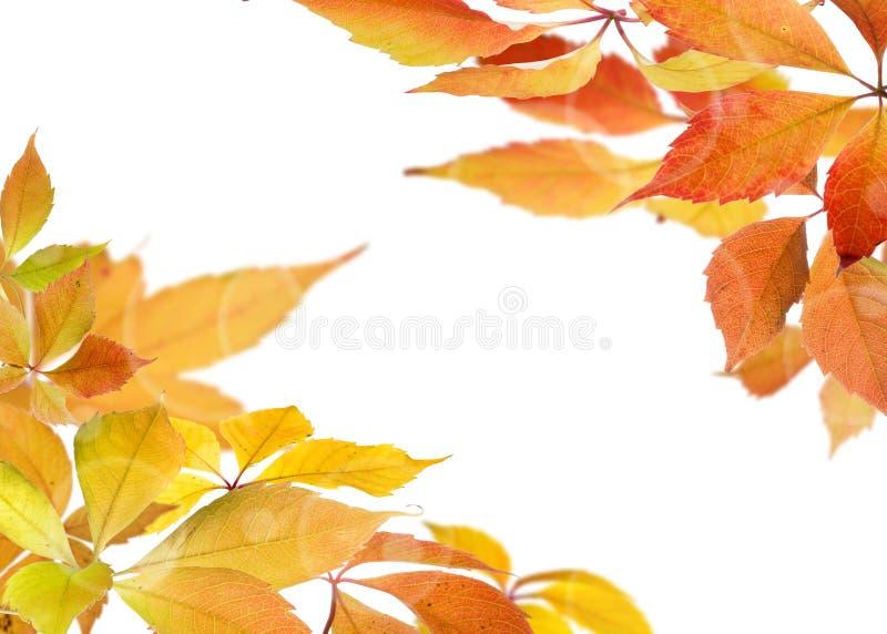 Jesień liści gałąź zdjęcia stock