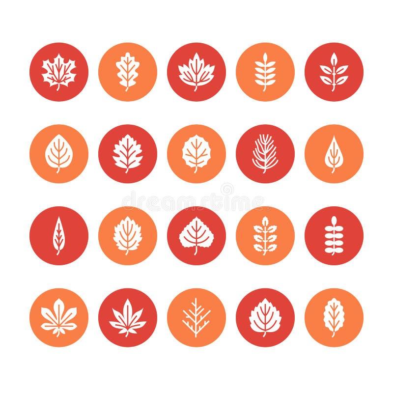 Jesień liści glifu płaskie ikony Liść pisać na maszynie, rowan, brzozy drzewo, klon, kasztan, dąb, cedrowa sosna, lipowa, guelder ilustracja wektor