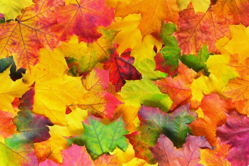 Jesień liści granica fotografia royalty free