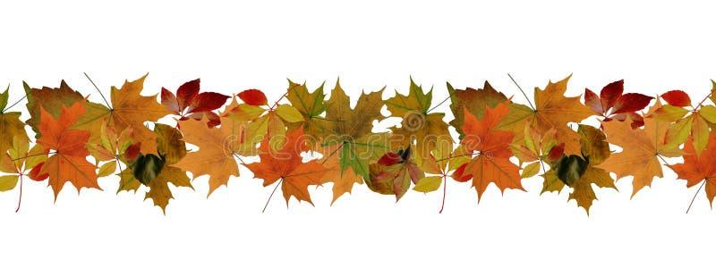 Jesień liści granica fotografia stock
