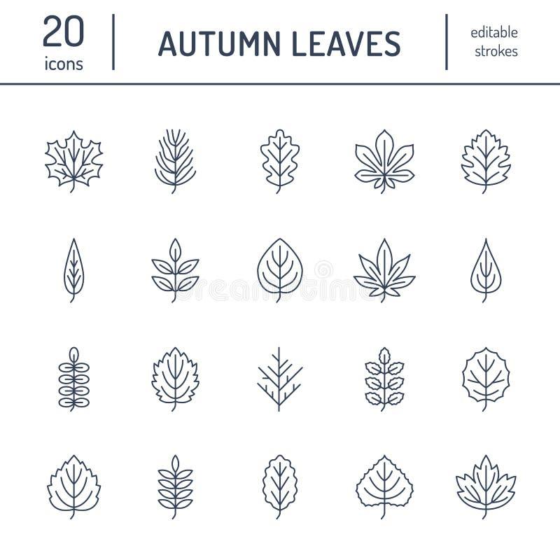 Jesień liści mieszkania linii ikony Liść pisać na maszynie, rowan, brzozy drzewo, klon, kasztan, dąb, cedrowa sosna, lipowa gueld royalty ilustracja