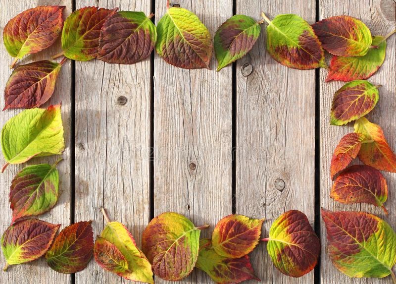 Jesień liści rama obraz stock