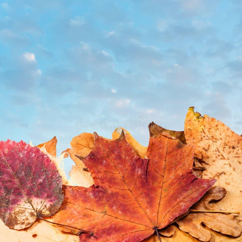 Jesień liścia ściółka i wieczór niebieskie niebo zdjęcia stock