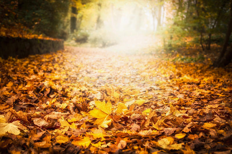 Jesień liścia ściółka w ogródzie lub parku, spada plenerowy natury tło z kolorowymi spadać liśćmi zdjęcia stock