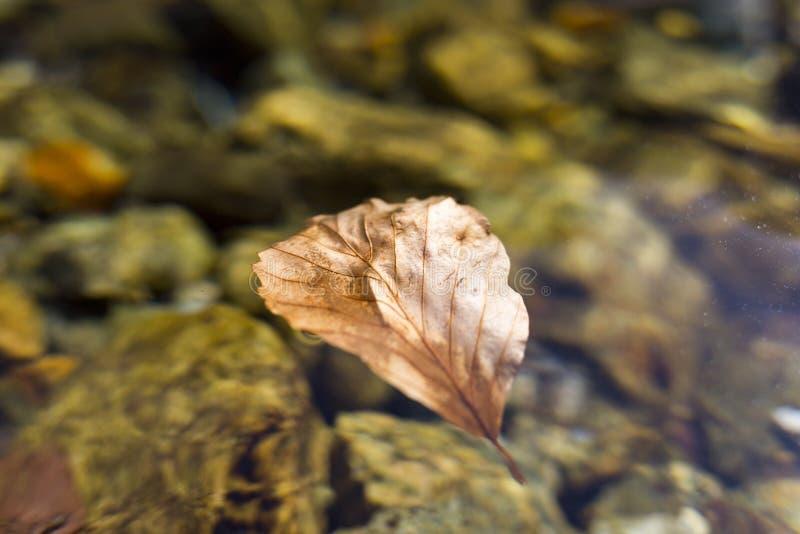 Jesień liścia czysta woda fotografia stock
