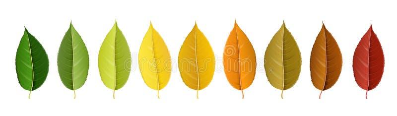 Jesień liścia kolorowa paleta w rzędzie ilustracja wektor