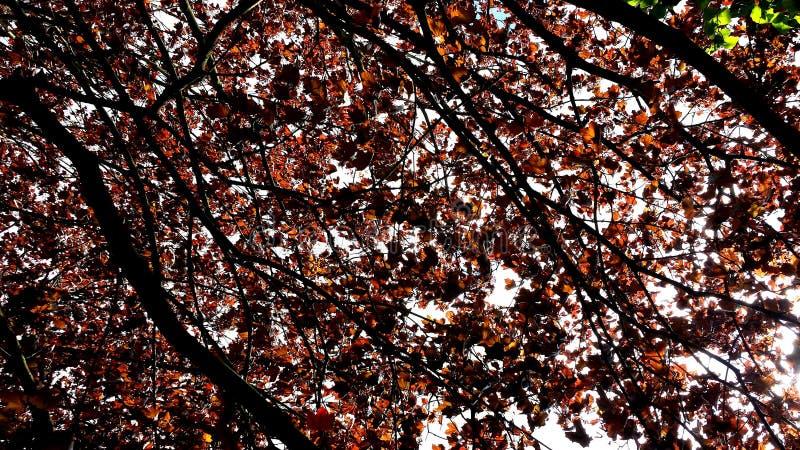 Jesień liścia sufit zdjęcie stock