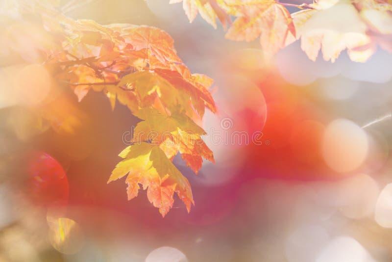 Jesień liście obraz royalty free