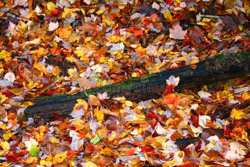 Jesień liście zdjęcia stock