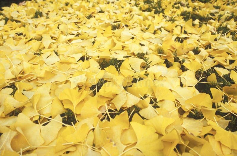 Jesień liście, Delaware zdjęcia royalty free