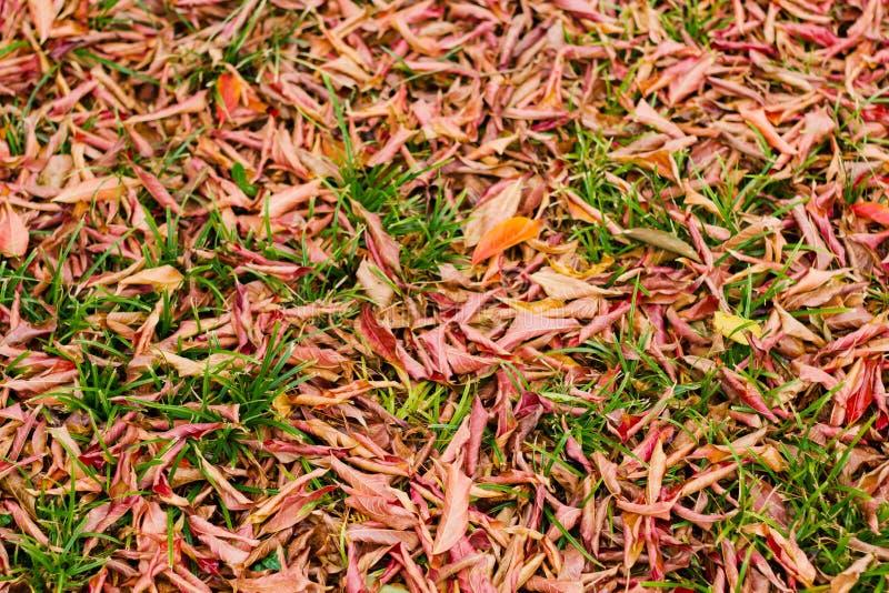 Jesień liście dla tła zdjęcia stock