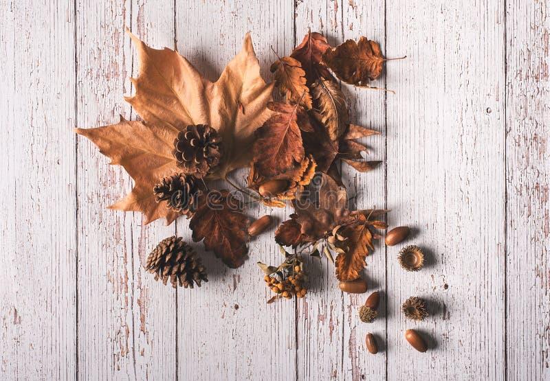 Jesień liście i acorns na białym drewnianym tle zdjęcia royalty free