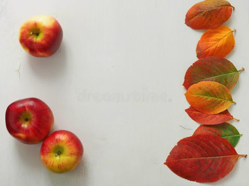 Jesień liście i czerwoni jabłka na białego drewnianego tło obrazy royalty free