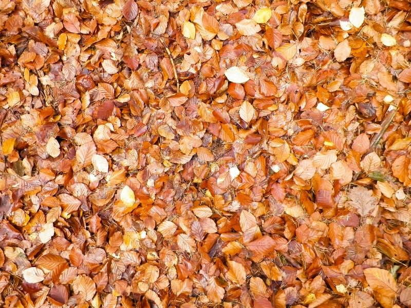 Jesień liście jako natury tło zdjęcie royalty free