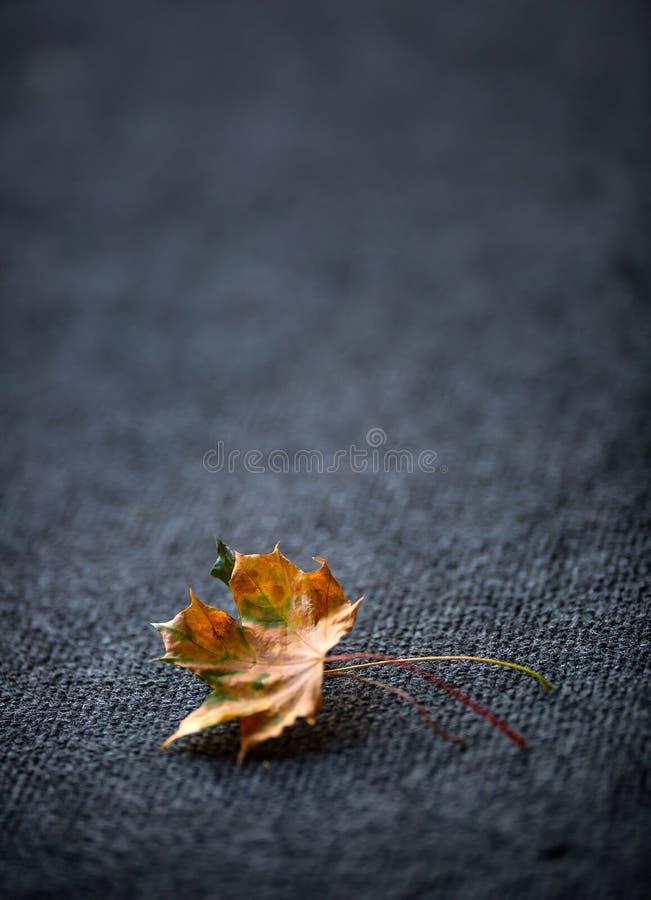 Jesień liście jeden lub dwa wolno kłaść na ciemnym dywanie zdjęcia royalty free