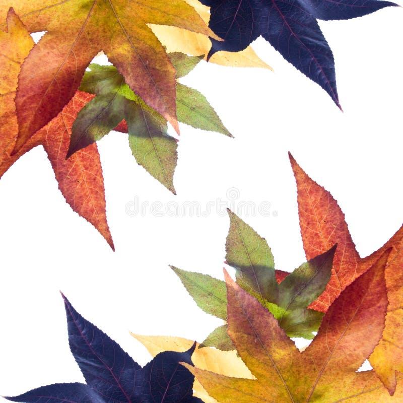 jesień liście jesienią obraz stock