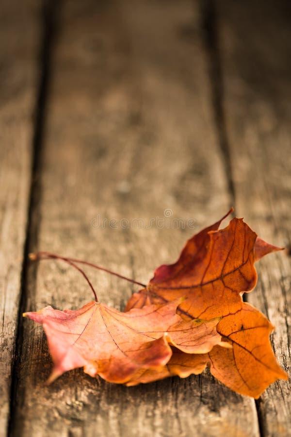 Jesień liście klonowi obraz stock