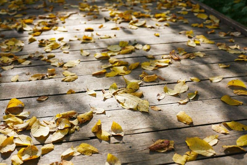 Jesień liście na śladzie zdjęcia stock