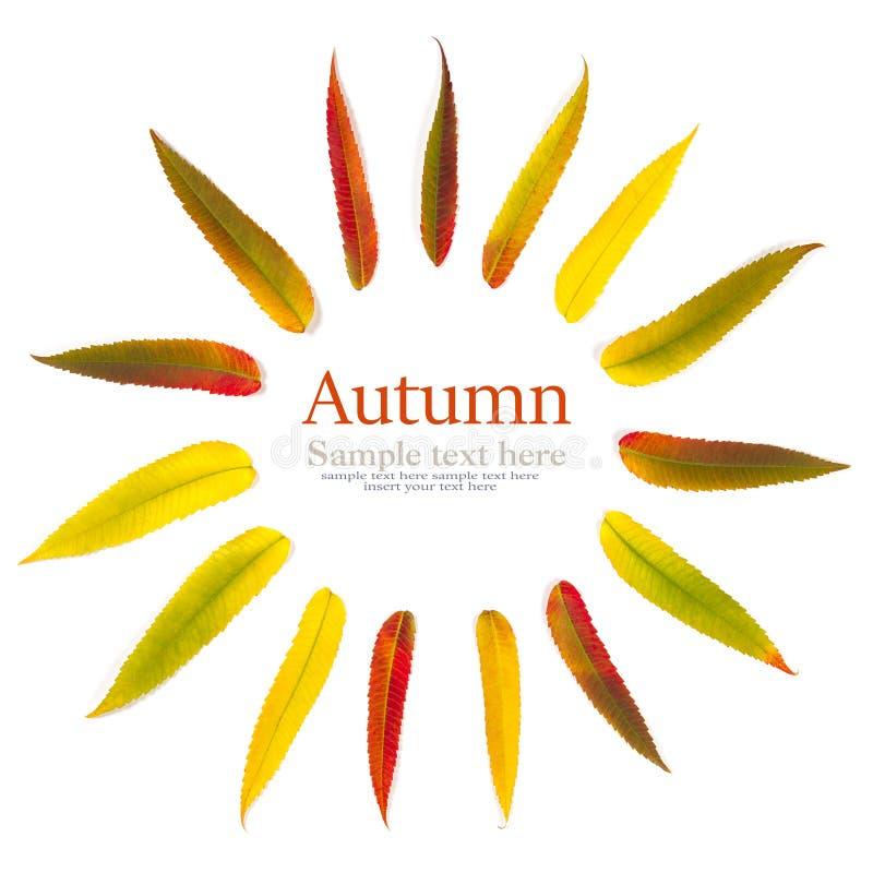 Jesień liście na białym tle, próbka tekst obrazy stock