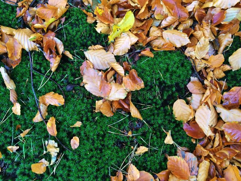 Jesień liście na mech obrazy stock