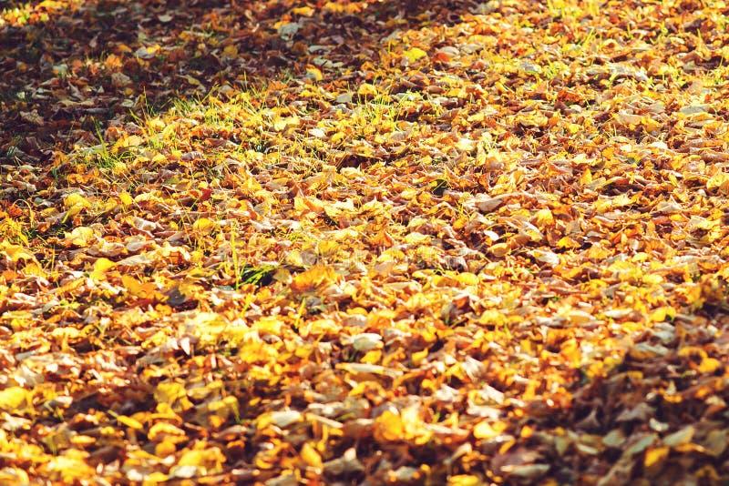 Jesień liście na ziemi w pogodnym ranku struktura fizyczna Spadać liście w pięknym jesień dniu jesień spadek lasowej ścieżki sezo zdjęcia stock