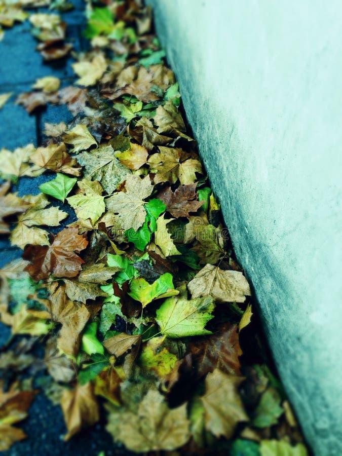 Jesień liście opuszczać behind obrazy royalty free