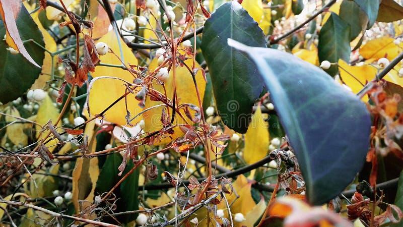 Jesień liście Piękno jesieni natura Jesieni fotografii sesja zdjęcia stock