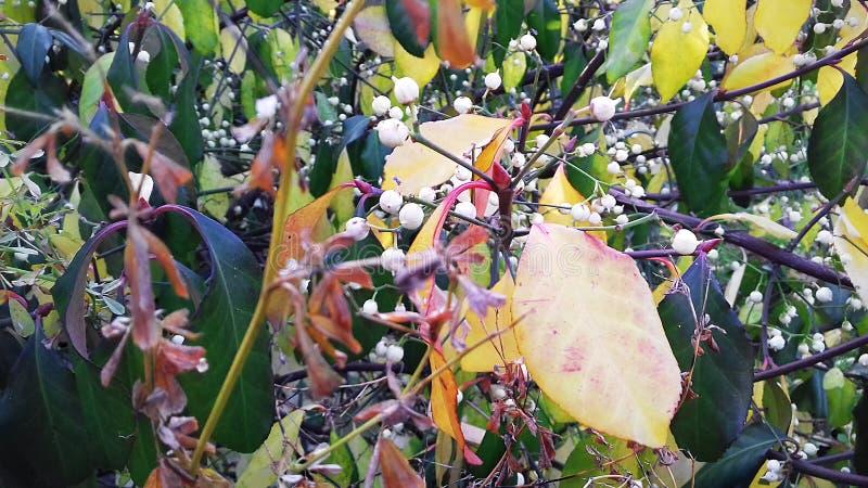 Jesień liście Piękno jesieni natura w wszystkie swój kolorach Nieświadome rośliny obrazy stock
