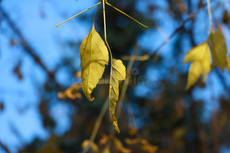 Jesień liście po deszczu zdjęcia royalty free