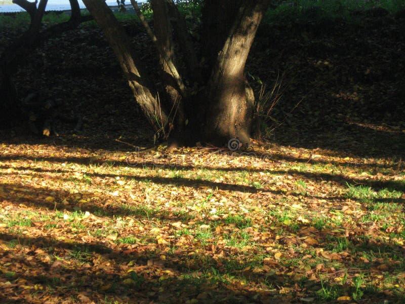 Jesień liście podnoszący out światłem słonecznym zdjęcia royalty free