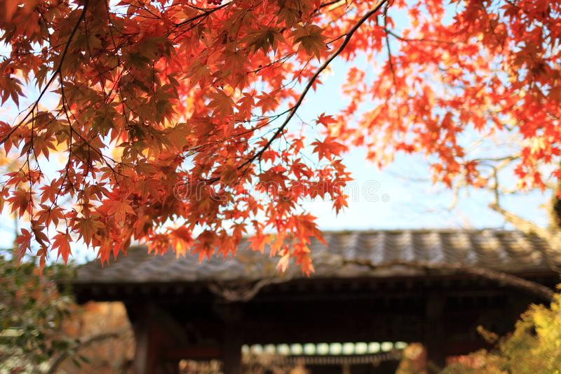 Jesień liście przy świątynną bramą Kaizo świątynia obrazy royalty free