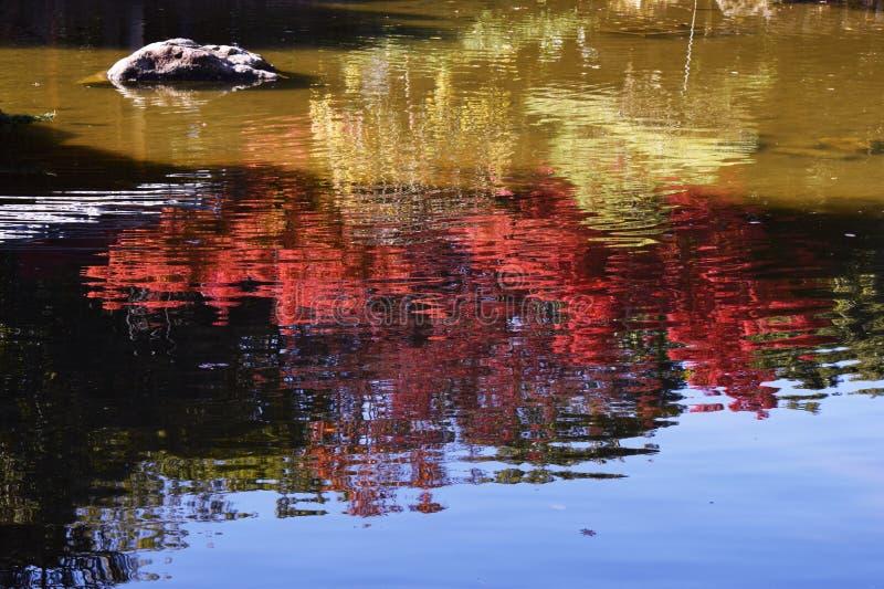 Jesień liście w Japońskim naturalnym parku fotografia stock