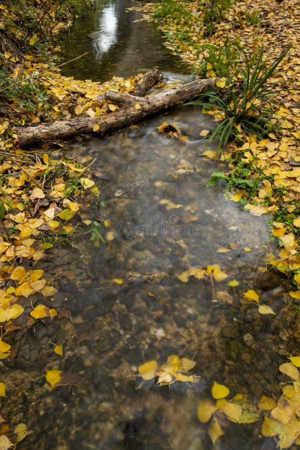 Jesień liście w Watermill, rzeczny Vinalopo obraz royalty free