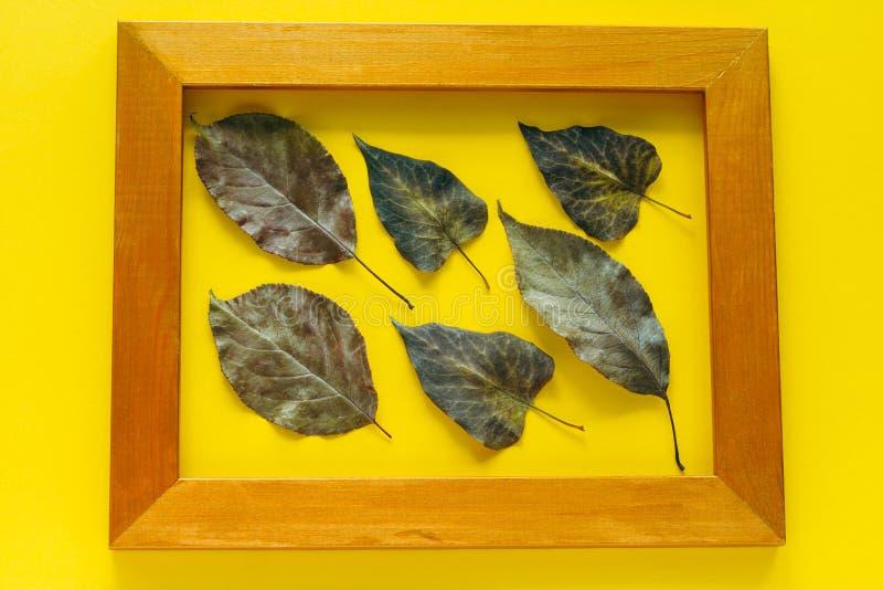 jesień liście w złotej ramie odizolowywającej na jaskrawym żółtym tle fotografia royalty free