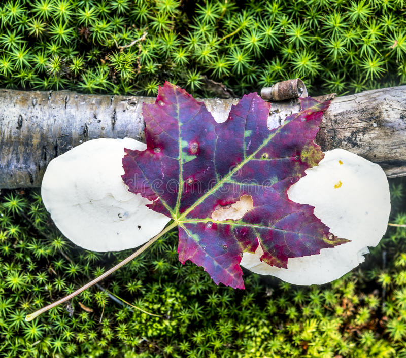 Jesień liście z pieczarkami zdjęcia stock