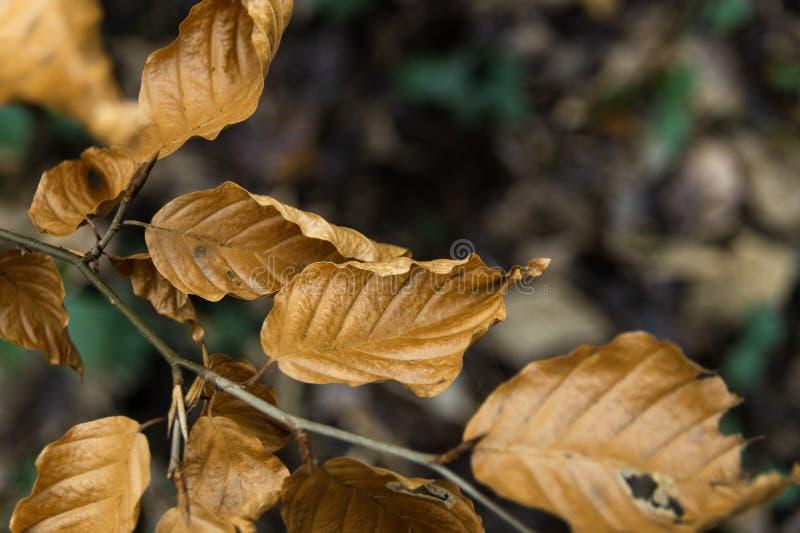 Jesień liście z rozmytym tłem fotografia stock