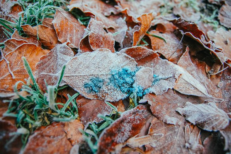 jesień marznący liść fotografia stock