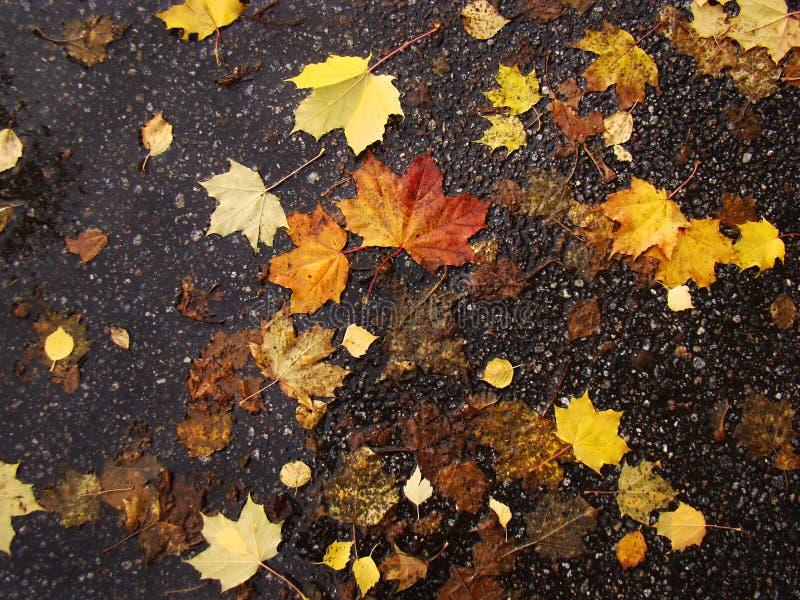 Jesień mokrzy liście kłamają na tle zmroku asfalt fotografia royalty free