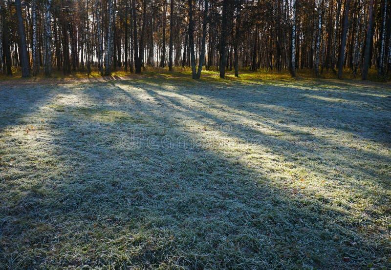Jesień, mroźna trawa w ranku obrazy stock