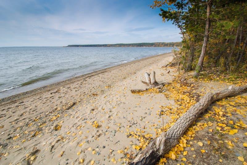 Jesień na brzeg fotografia stock