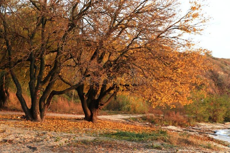 Jesień na rzece zdjęcia stock
