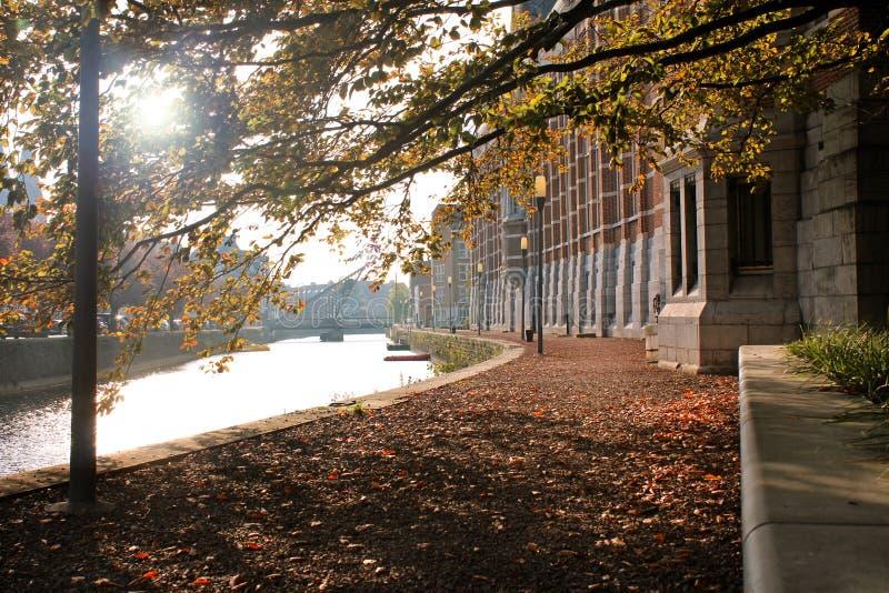 Jesień nad rzeką w Dendermonde, Belgia obrazy stock