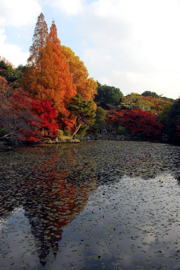jesień odbijający drzewa zdjęcia royalty free
