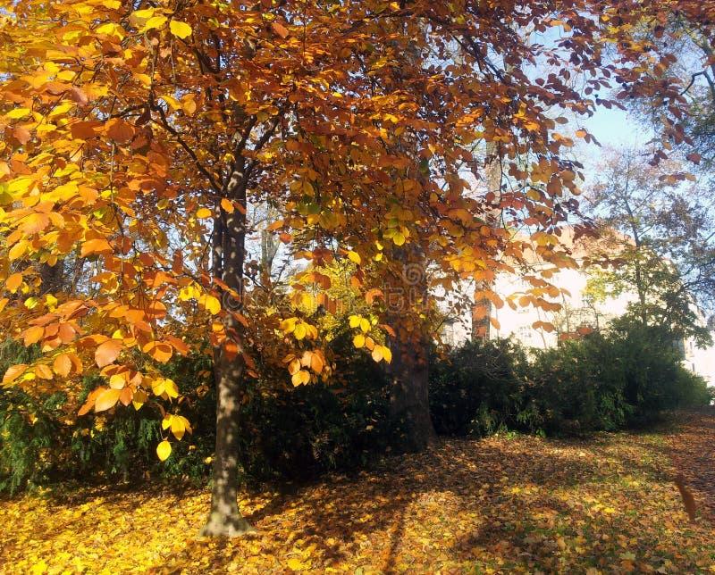 Jesień ogród zdjęcie stock