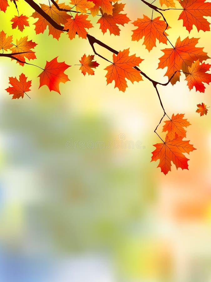jesień ostrości liść czerwieni płycizna royalty ilustracja
