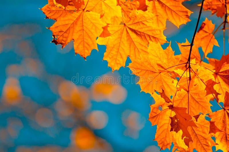 jesień ostrości liść spłycają bardzo fotografia stock