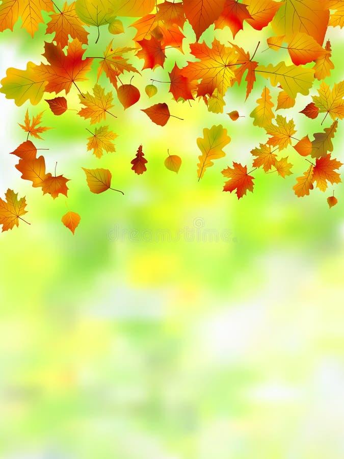 jesień ostrości liść spłycają bardzo ilustracja wektor